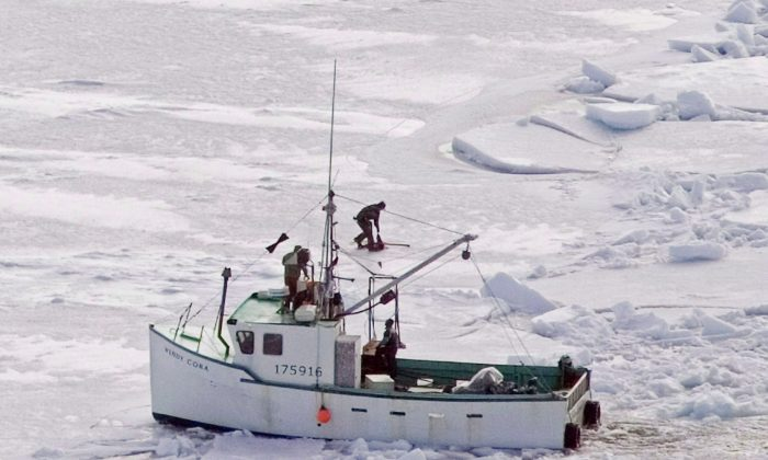 Hunters kill a harp seal during the annual East Coast seal hunt in the southern Gulf of St. Lawrence on March 25, 2009. Animal rights groups are upset over a bill that would make it more difficult for them to observe the seal hunt. (The Canadian Press/Andrew Vaughan)