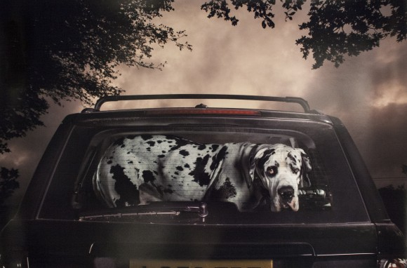 A photo by Martin Usborne from his series The Silence of Dogs in Cars, at the booth of Lee Marks, AIPAD photography show April 9, 2014, New York. (Samira Bouaou/Epoch Times)