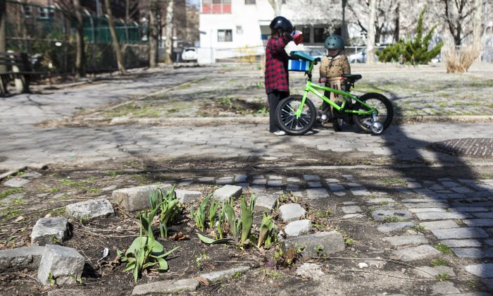 Harrison, 4, and Ansel, 2, at the Luther Gulick Park on the Lower East Side in Manhattan, April 17, 2014. Residents have taken to planting new flowers in the spaces of dirt where trees once stood. (Samira Bouaou/Epoch Times)