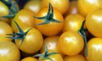 Sorry, Corn-on-the Cob Is GMO Too