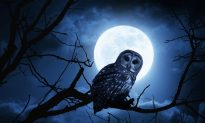 Night Owls Are Less Likely to Get Married
