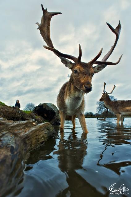 Aqua deer (Max Ellis)