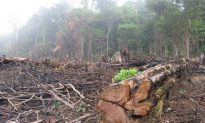 Extent of Rampant Timber Laundering in Brazilian Amazon Revealed