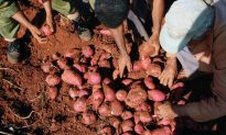 How to Cook Sweet Potatoes to Best Retain Nutrition