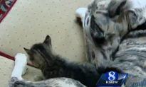 Dog Adopts 4 Kittens