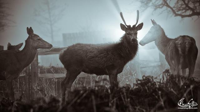 Foggy (Max Ellis)