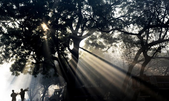 Early morning sunlight filters through the branches of a tree as two men walk past in the Hauz Khaz neighborhood of New Delhi on January 31, 2012. New Delhi has a Tree Helpline which lets people report damage, cutting, and uprooting of trees. (Roberto Schmidt/AFP/Getty Images)