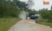 Watch Terrifying Moment an Elephant Rolls Over a Car (+Video)