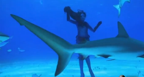 Real-Life Mermaid Swims With Sharks (Video)