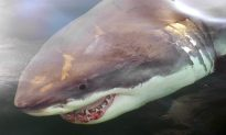 Glow-In-the-Dark, 'Ninja' Shark Discovered