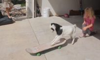 Goat First Rides on Skateboard (Video)