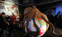 For the Betting Man: Four Animal Oracles of the 2014 World Cup