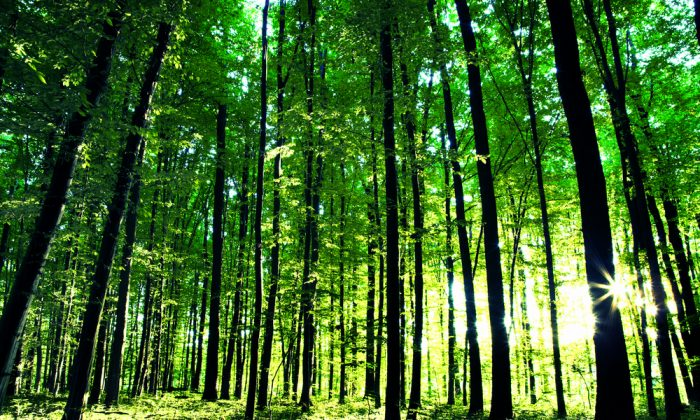 Beautiful green forest. (*Shutterstock)