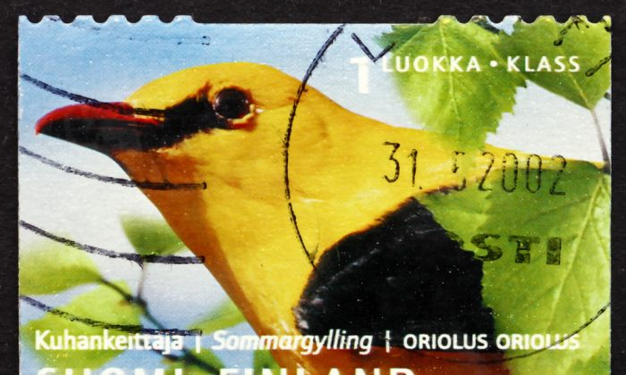 Stamp printed in the Finland with  Eurasian Golden Oriole, Passerine Bird. (*Shutterstock)