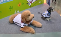 Pets Dress Up in World Cup Team Football Shirts (Video)
