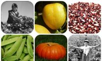 7 Organic Garden Crops to Plant Now, It's Not Too Late