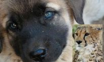 Cats' Best Friend? A New Role for Guard Dogs in South Africa