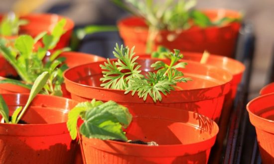 You Can Grow These Six Vegetables in Your Home