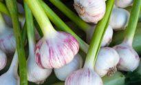 Healing Benefits of Garlic