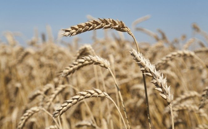 6 Signs You Might Have Gluten Sensitivity and Not Know it