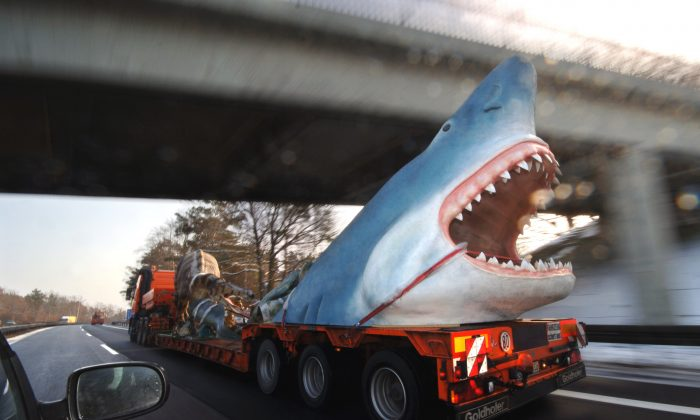 Megalodon facts about the extinct prehistoric shark illustrations a truck in germany transports a life size model of a megalodon shark in this march 7 2006 file photo ap photosven kaestner altavistaventures Image collections