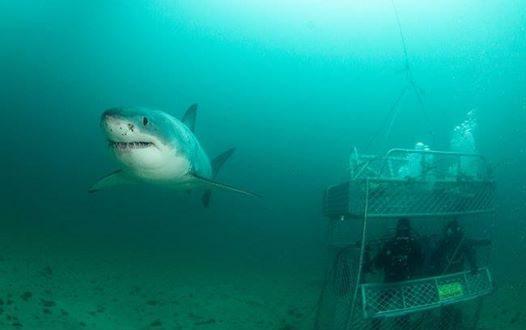 'Lair of the Mega-Shark' Shark Week Program Sees New Zealand Search for Huge Great White Shark