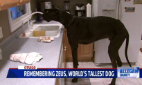World's Tallest Dog Dies At Age 5 (Video)