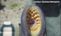 'Alien' Invader Found in River (Video)