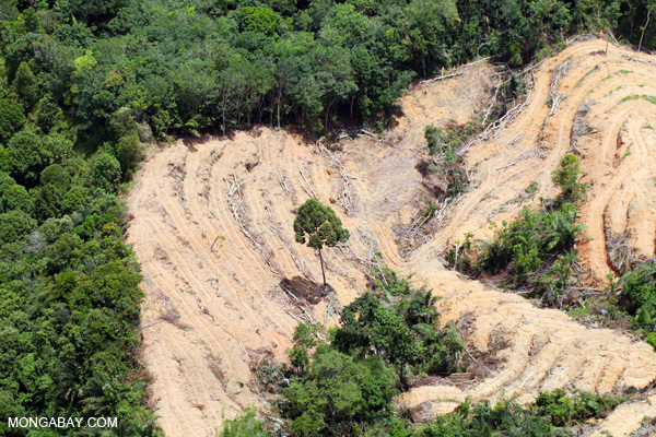 Destruction of rainforest in Malaysia for palm oil production. Photos by Rhett A. Butler.