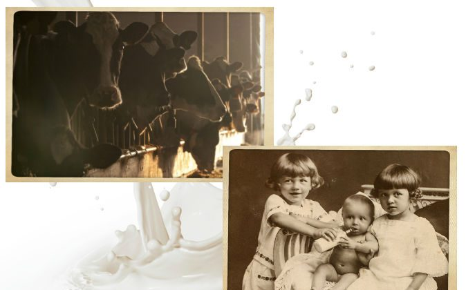 Right: A baby drinking milk in the 1920s, at a time when pasteurization had already become popular but its pitfalls were still widely discussed. (Shutterstock*) Left: A file photo of a dairy farm. (Shutterstock*) Background: Milk (Thinkstock)