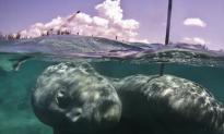 Artist Builds 60 Tonne Underwater Sculpture in the Bahamas (Video)