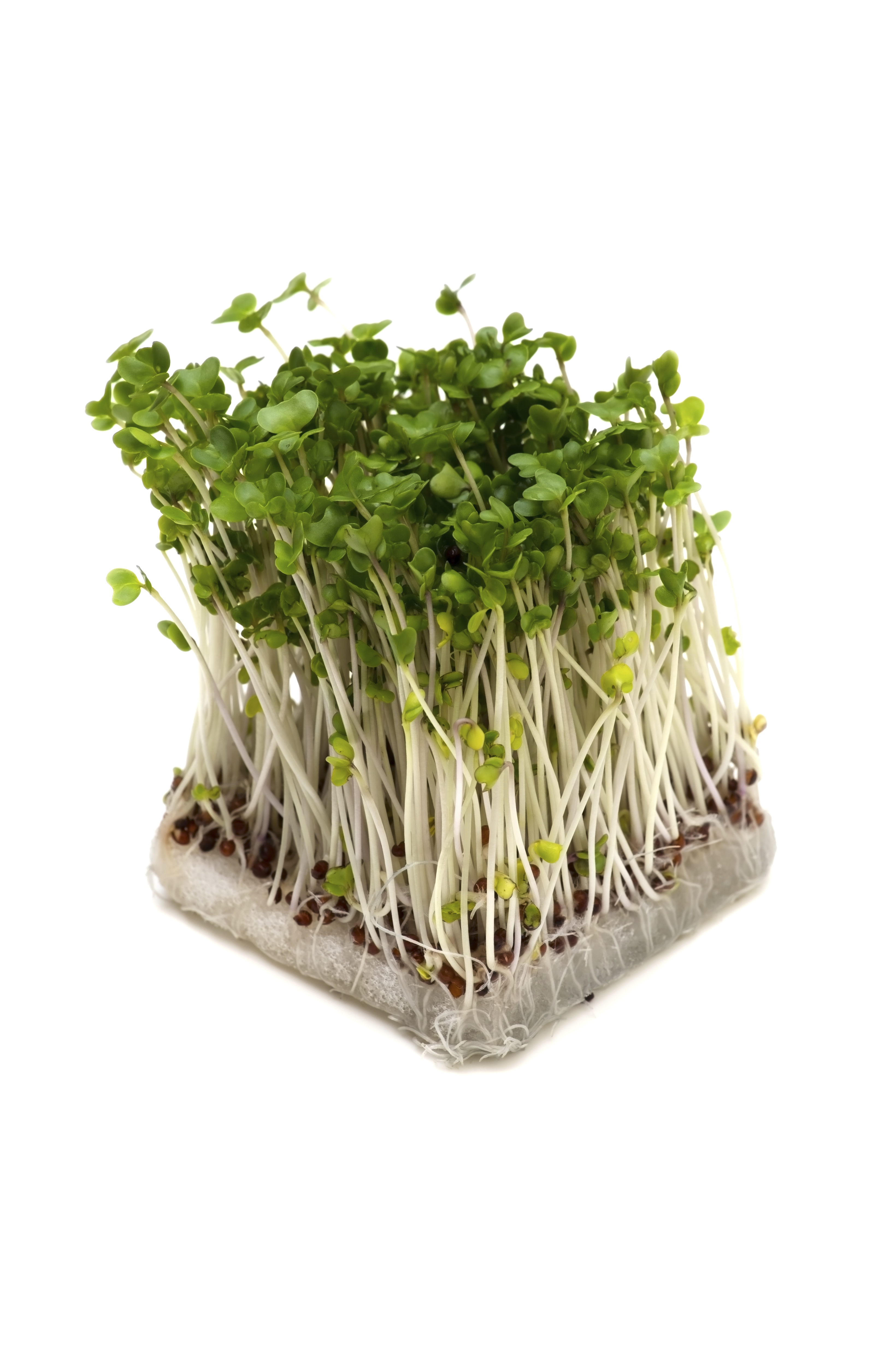 Benefits of broccoli sprouts | Cancer Survivors Network