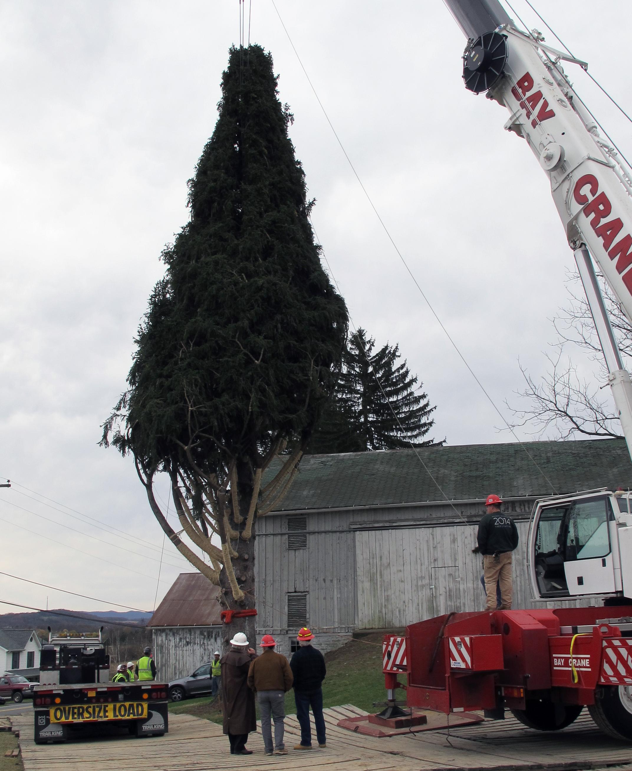 Rockefeller Christmas Tree Lighting 2014: Rockefeller Center Christmas Tree Coming From Pa