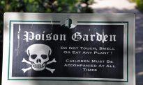 Meet Five of the UK's Most Poisonous Plants