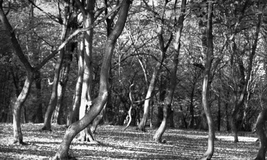 Hoia Baciu (Hoia Forest) in Romania. (Bortescristian via Compfight)
