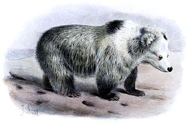 The Tibetan Blue Bear, drawn in 1897 by Joseph Smit. (Wikimedia Commons)