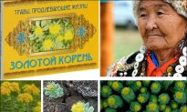 US Scientists Prove What Siberian Grannies Have Known for Generations About Magical Arctic Herb