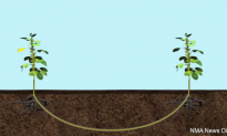 Plants Communicate Through Their Own Underground Network (Video)