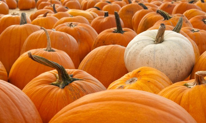 Pumpkin is a native of the Americas, and was revered by tribes throughout the region as a valuable food and medicine.  (Shutterstock/mguttman)
