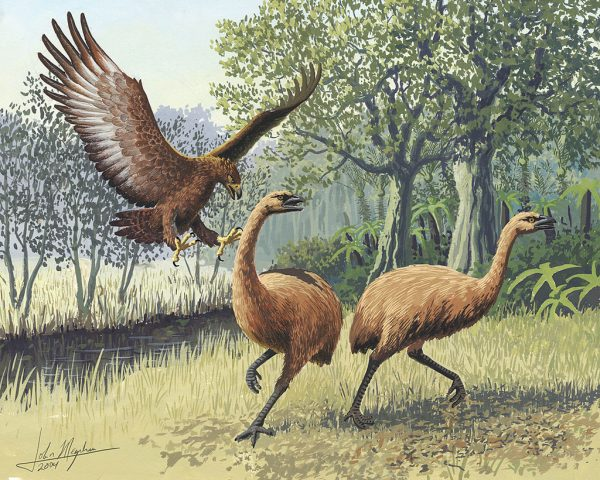 Giant Haasts eagle attacking New Zealand moa (Wikimedia Commons)