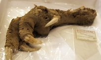 'Dragon skeleton' purportedly found in China: video