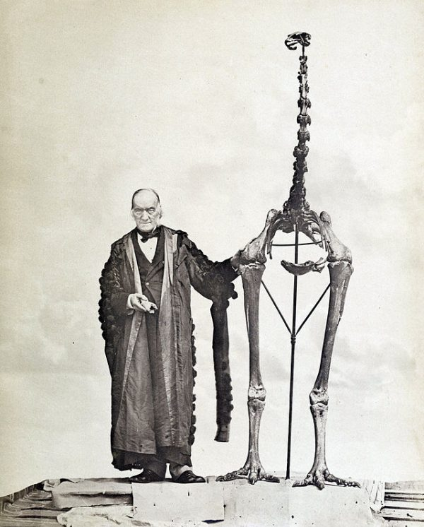 Sir Richard Owen standing next to a Moa skeleton and holding the first bone fragment belonging to a Moa ever found. (Wikimedia Commons)
