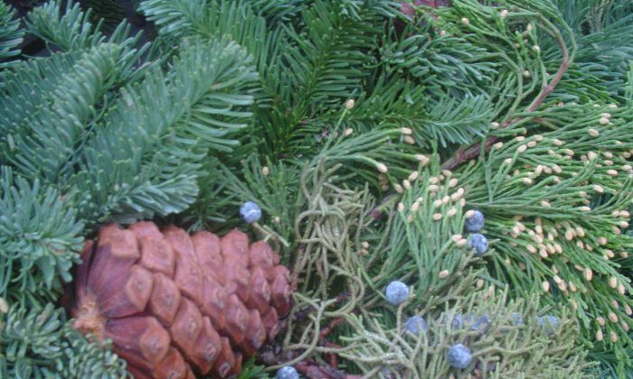 Evergreens have a cool and refreshing scent thanks to chemicals known as essential oils. Conan Milner/Epoch Times