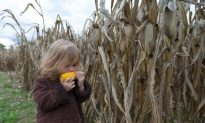Why Do We Fear GMOs More Than Global Warming?