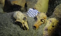 Underwater Cave Found to House Large Fossil Graveyard (Video)