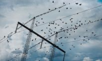 Birds Can Sense Extreme Weather Events and Storms More Than 24 Hours in Advance