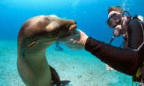 Swimming with Seals Should Be on Your Bucket List (Video)