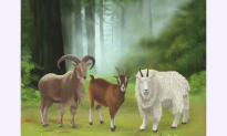 What the Chinese Say About Year of the Goat People