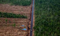 China Banks Funding Deforestation in Indonesia