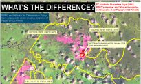 Palm Oil Deforestation Worsens Despite Pledges